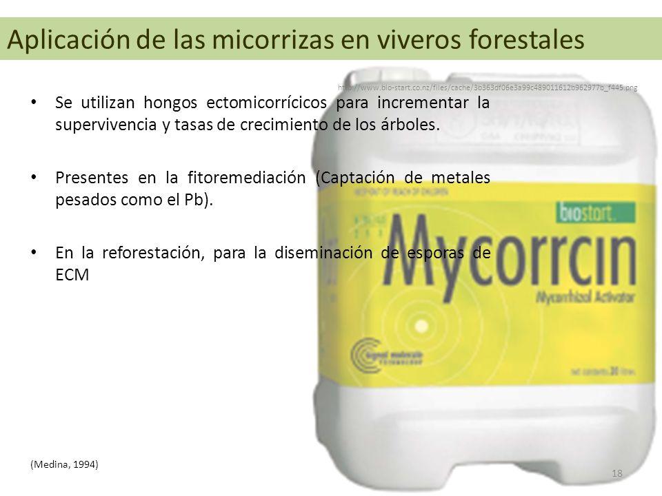 Aplicación de las micorrizas en viveros forestales