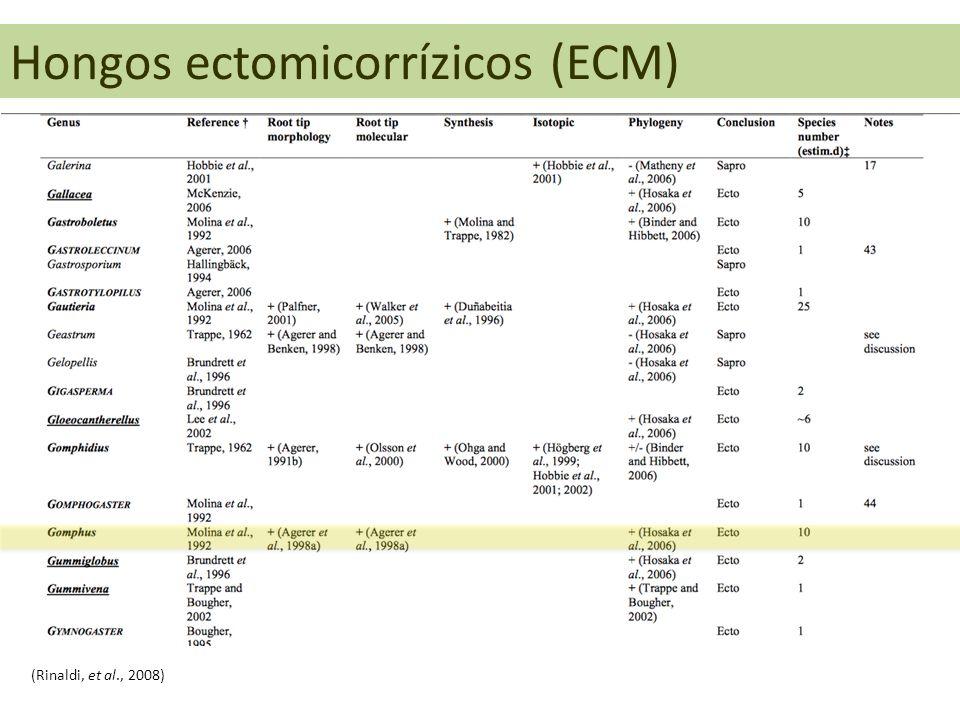 Hongos ectomicorrízicos (ECM)
