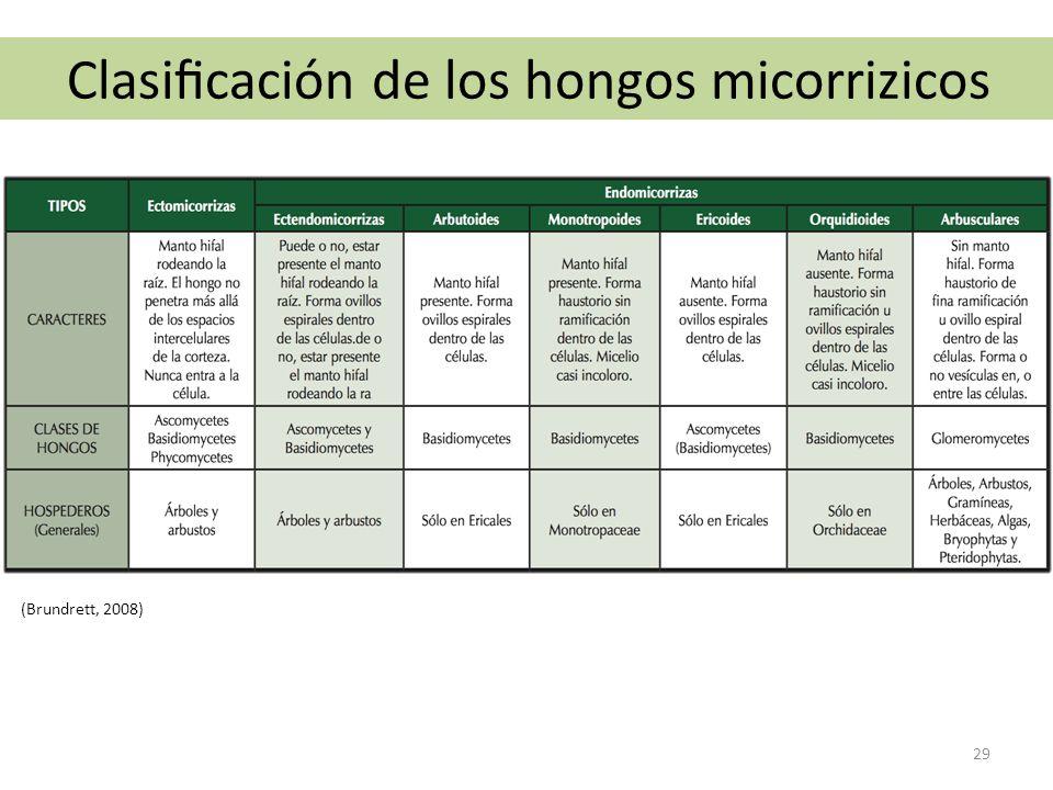 Clasificación de los hongos micorrizicos