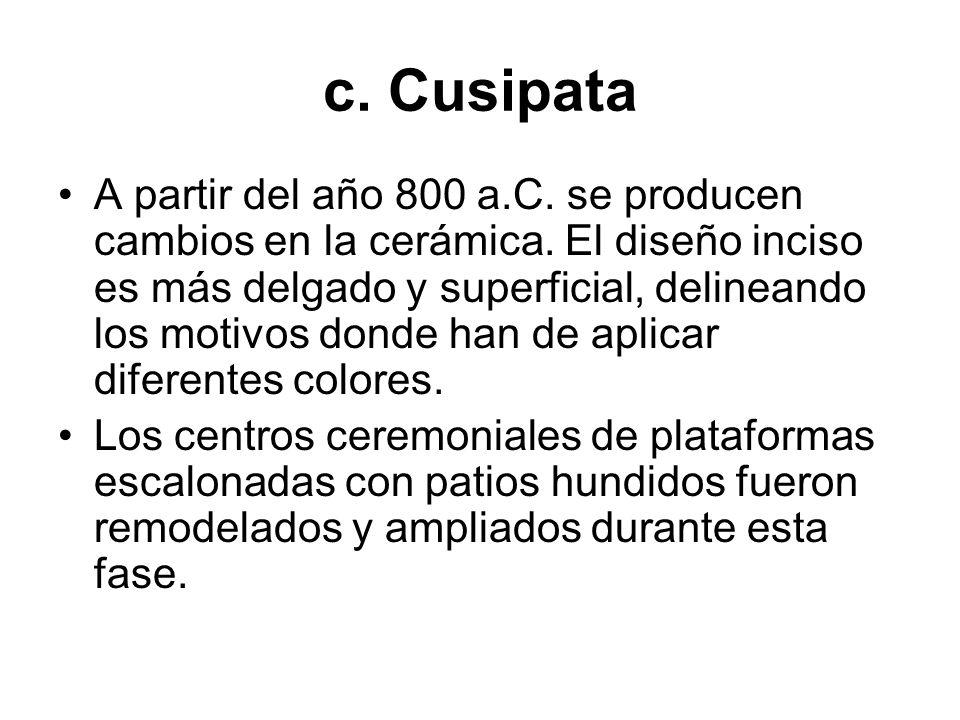 c. Cusipata