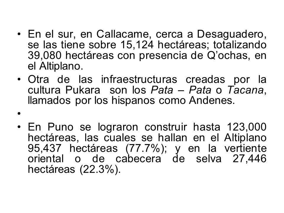 En el sur, en Callacame, cerca a Desaguadero, se las tiene sobre 15,124 hectáreas; totalizando 39,080 hectáreas con presencia de Q'ochas, en el Altiplano.