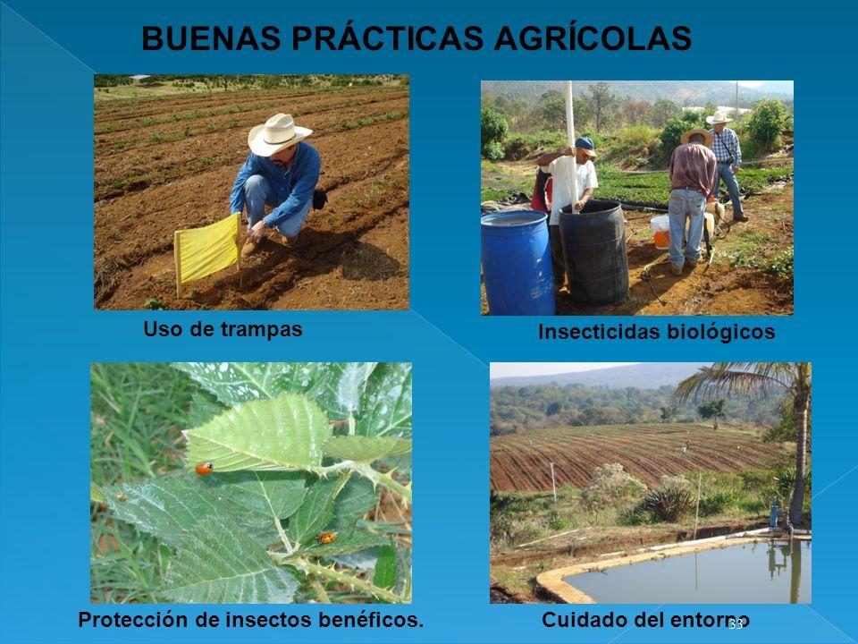 Protección de insectos benéficos.
