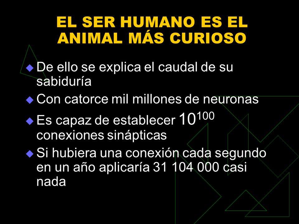 EL SER HUMANO ES EL ANIMAL MÁS CURIOSO