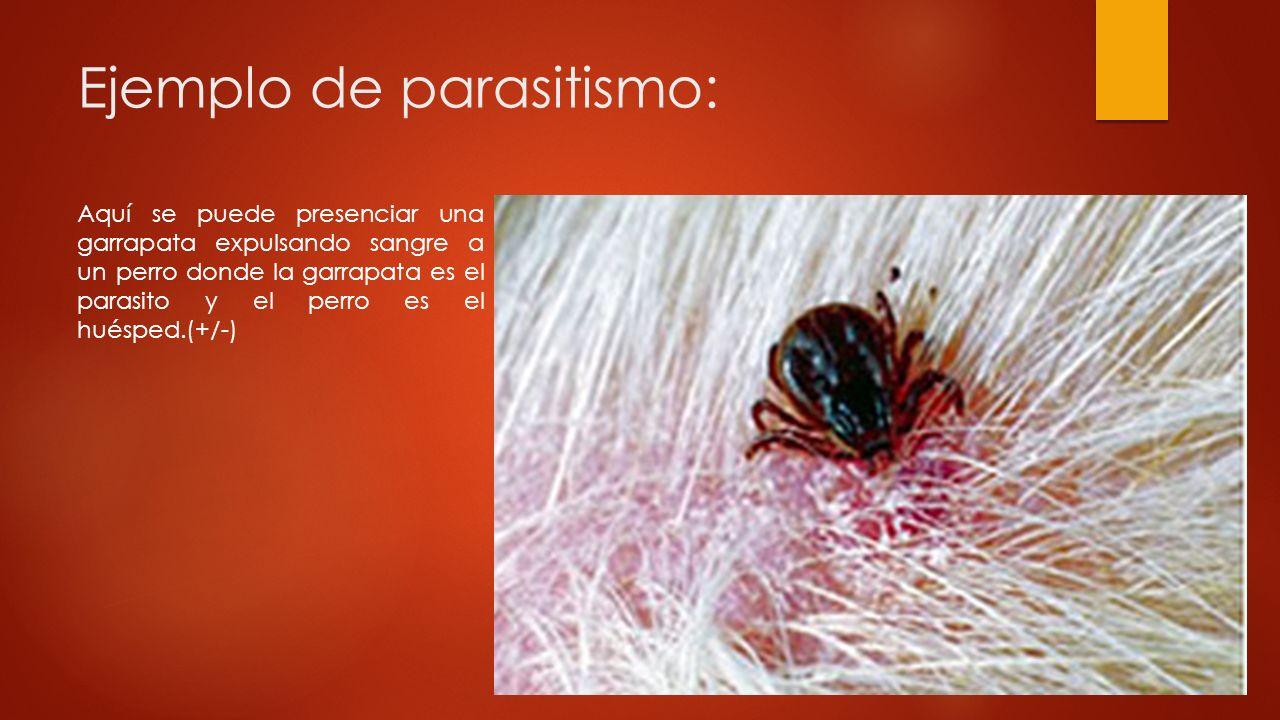 Ejemplos De Parasitismo | interacciones entre especies ppt ...