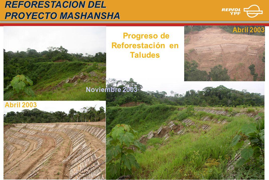 Reforestación en Taludes