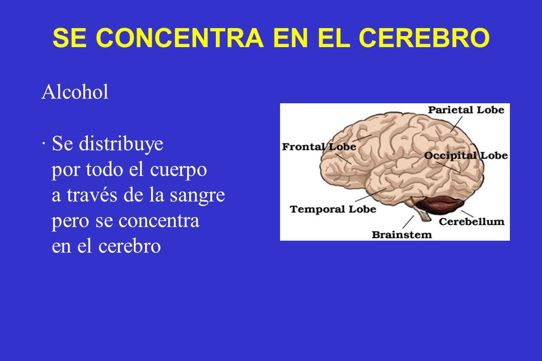 SE CONCENTRA EN EL CEREBRO