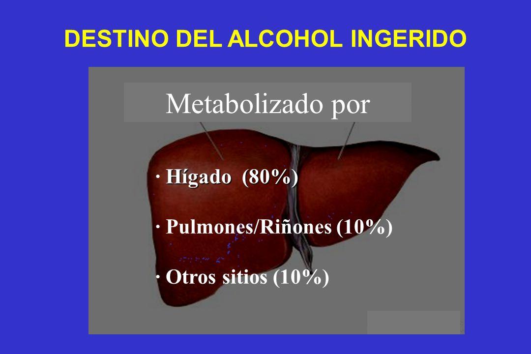 DESTINO DEL ALCOHOL INGERIDO