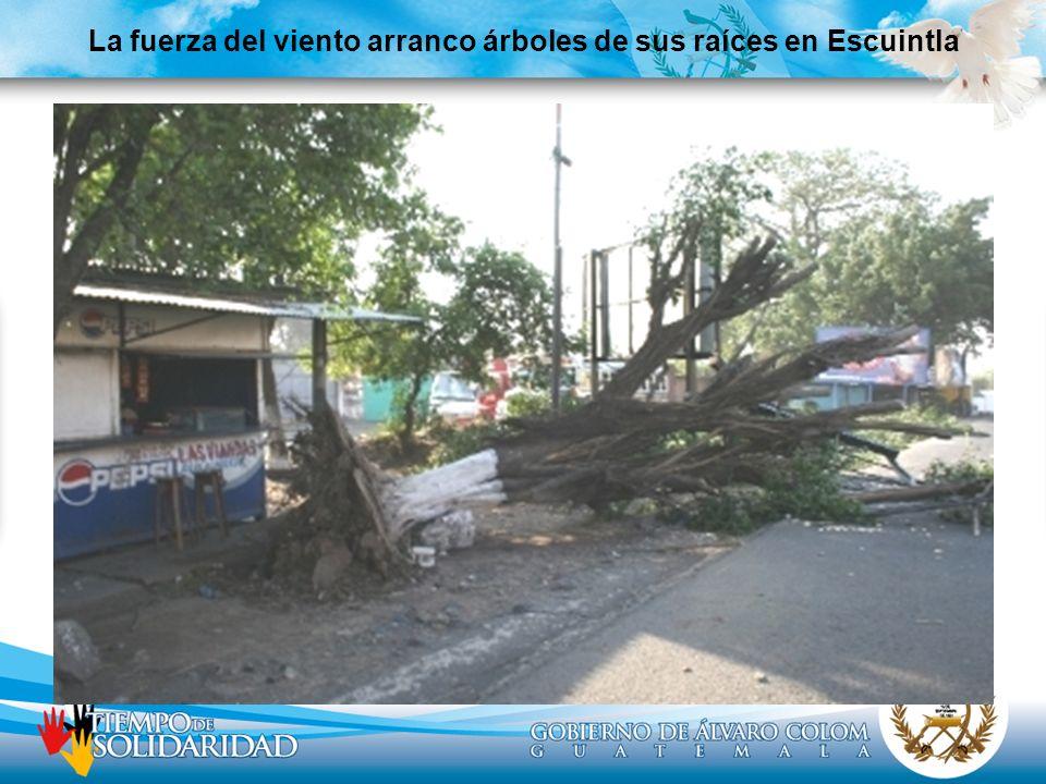La fuerza del viento arranco árboles de sus raíces en Escuintla