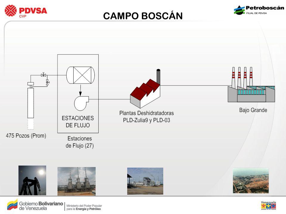 CAMPO BOSCÁN