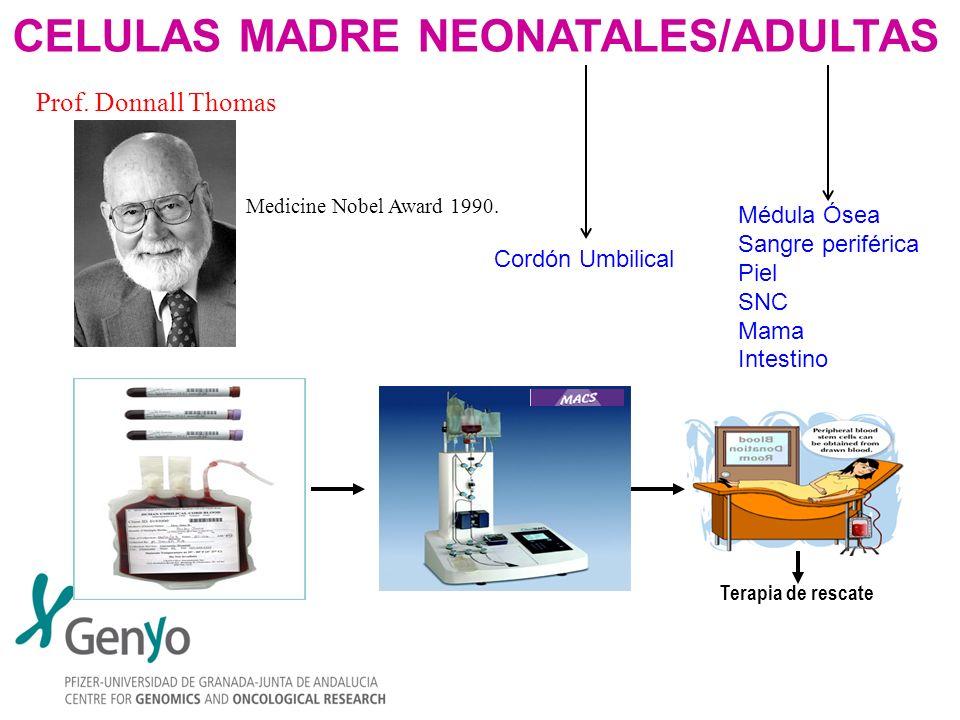 CELULAS MADRE NEONATALES/ADULTAS
