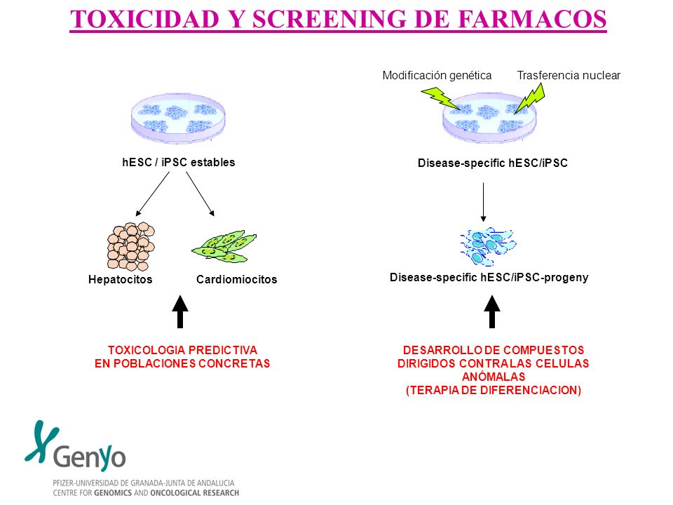 TOXICIDAD Y SCREENING DE FARMACOS