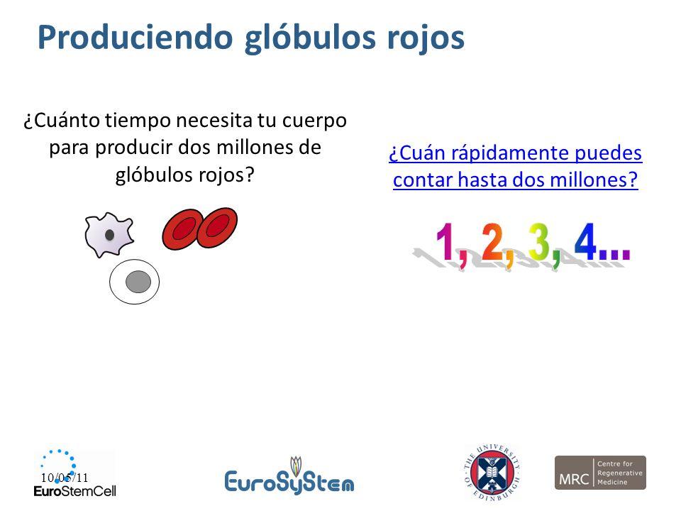 Produciendo glóbulos rojos