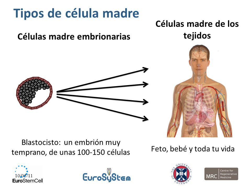 Células madre de los tejidos Células madre embrionarias