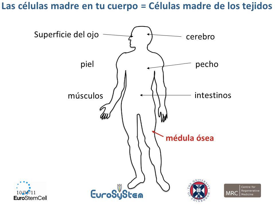 Las células madre en tu cuerpo = Células madre de los tejidos