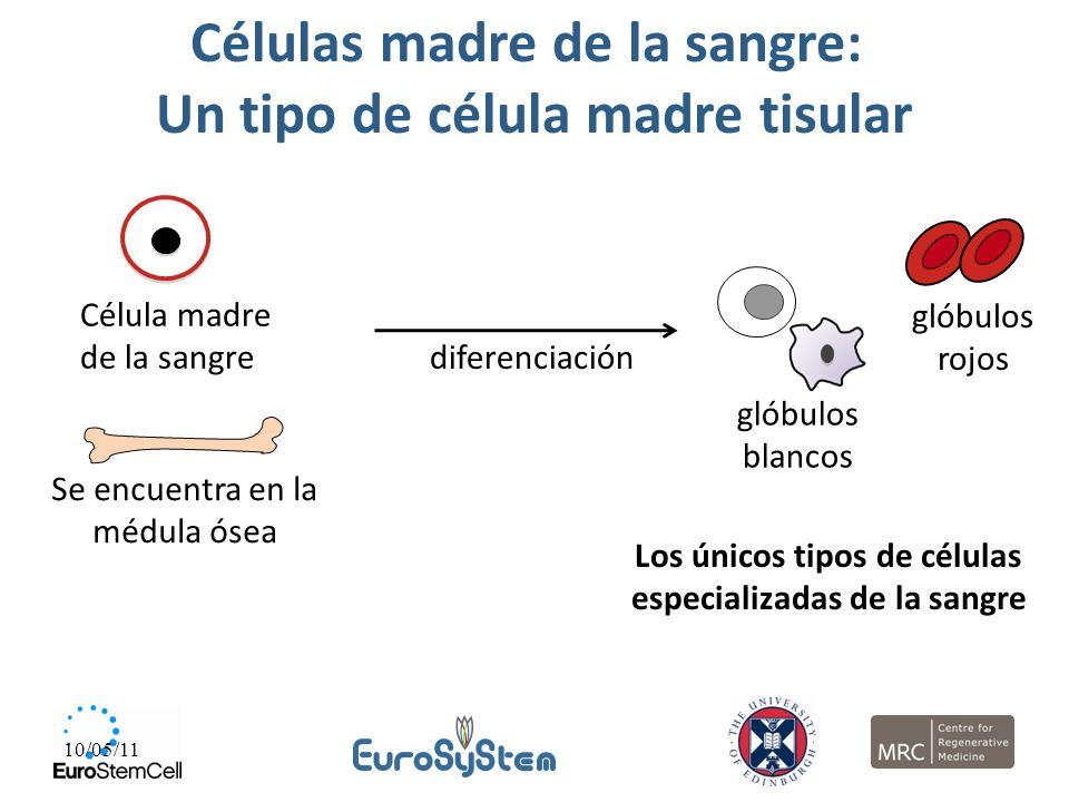 Células madre de la sangre: Un tipo de célula madre tisular