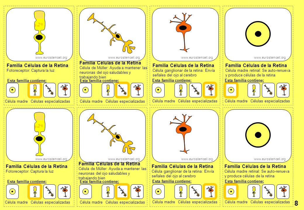 8 Familia Células de la Retina Familia Células de la Retina