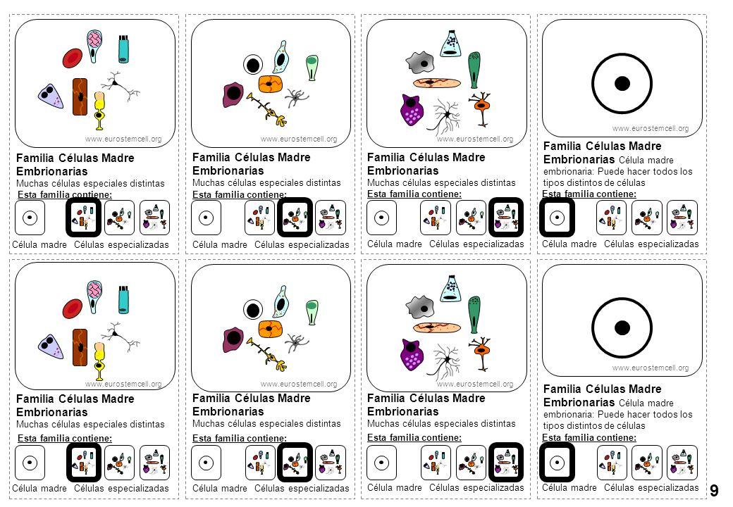 www.eurostemcell.orgwww.eurostemcell.org. www.eurostemcell.org. www.eurostemcell.org.