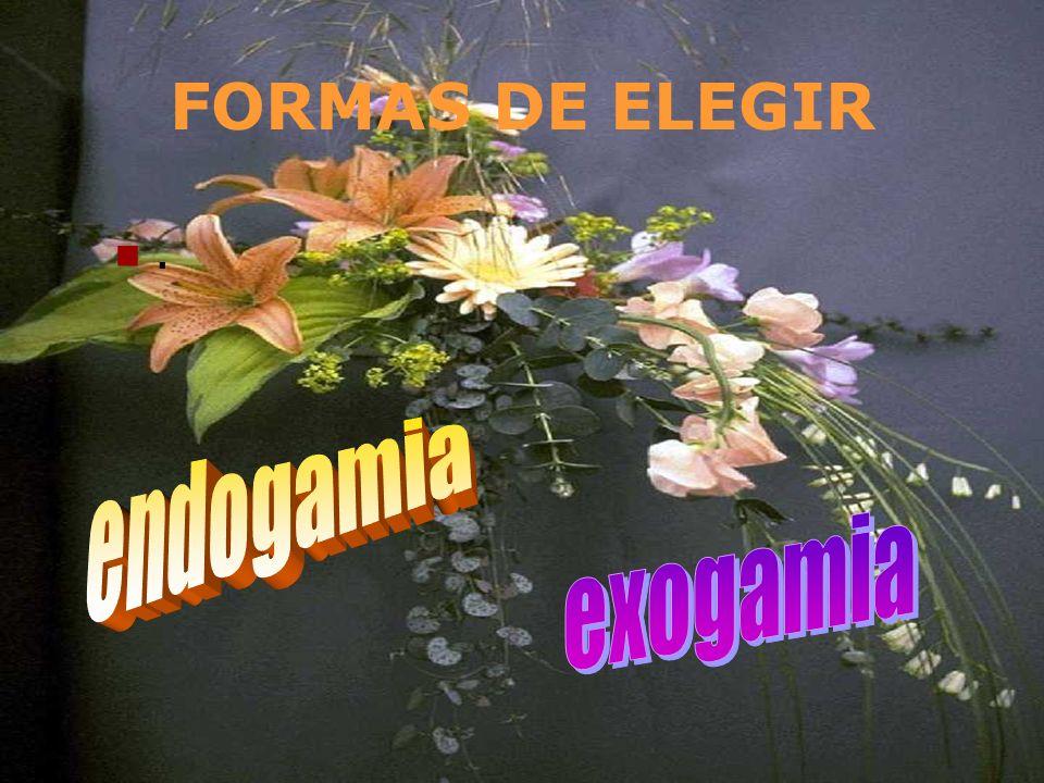 FORMAS DE ELEGIR . endogamia exogamia