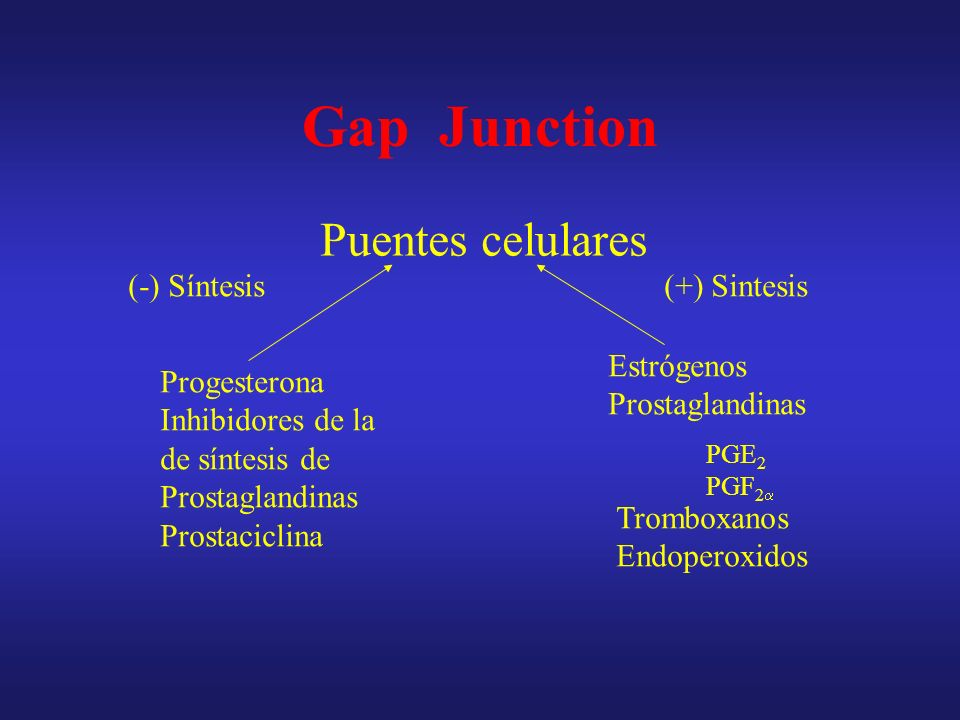 Gap Junction Puentes celulares (-) Síntesis (+) Sintesis Estrógenos
