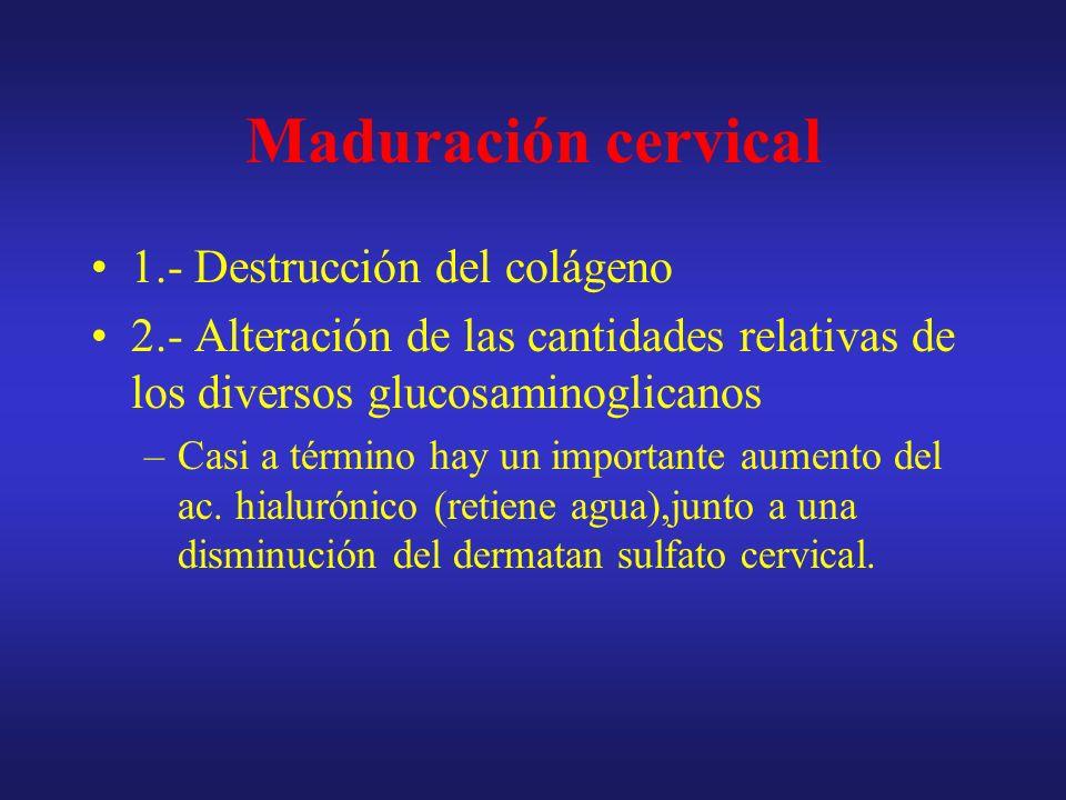 Maduración cervical 1.- Destrucción del colágeno