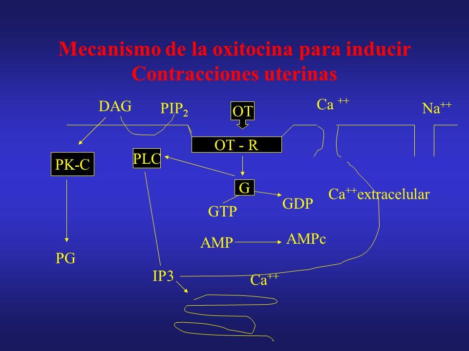 Mecanismo de la oxitocina para inducir Contracciones uterinas