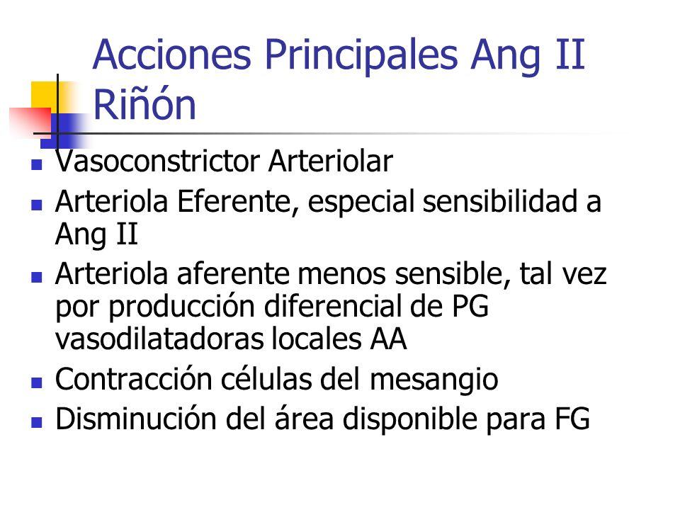 Acciones Principales Ang II Riñón