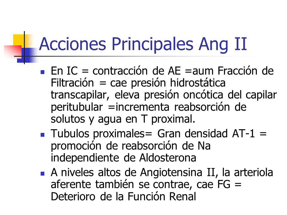 Acciones Principales Ang II