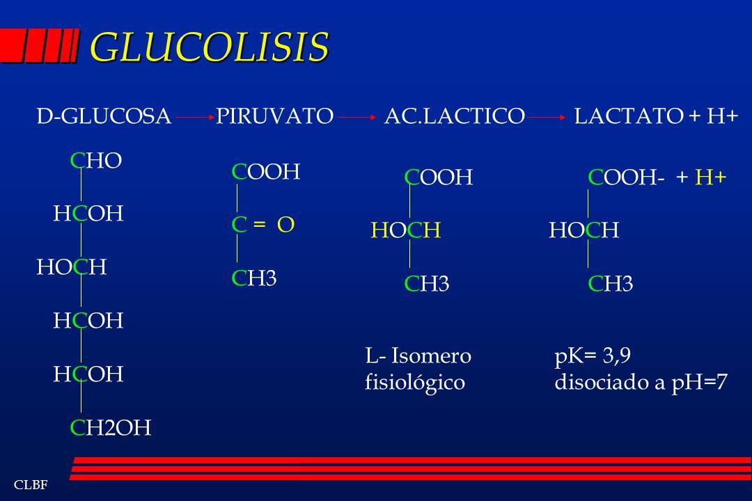 GLUCOLISIS D-GLUCOSA PIRUVATO AC.LACTICO LACTATO + H+ CHO HCOH HOCH