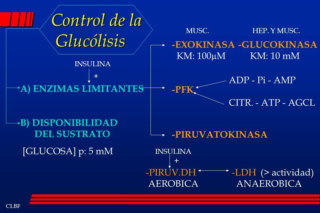 Control de la Glucólisis