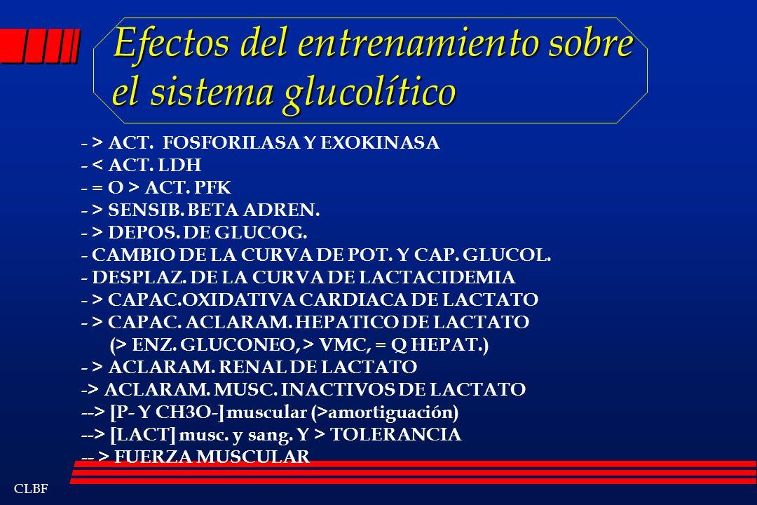 Efectos del entrenamiento sobre el sistema glucolítico