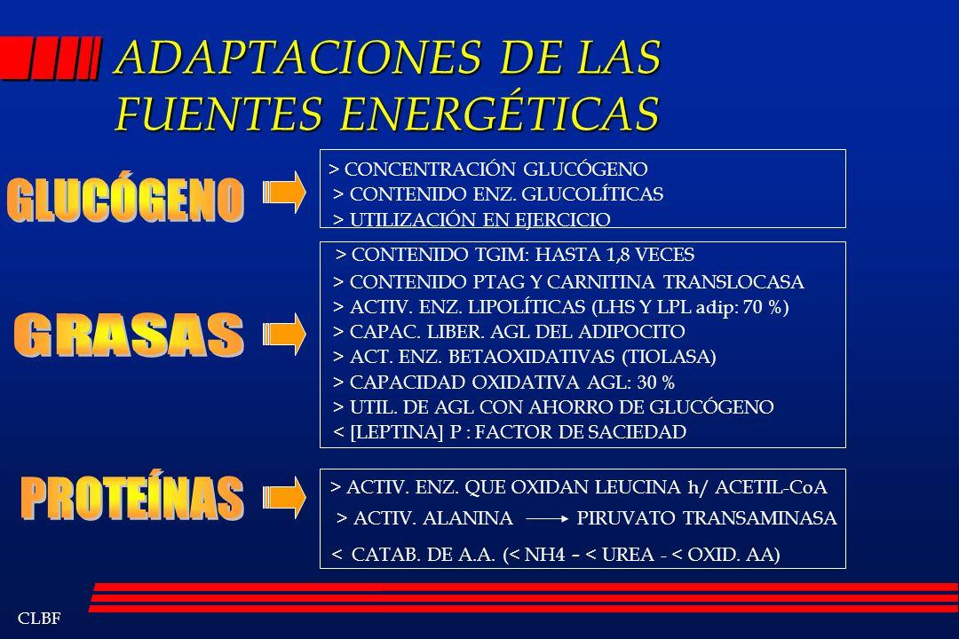ADAPTACIONES DE LAS FUENTES ENERGÉTICAS
