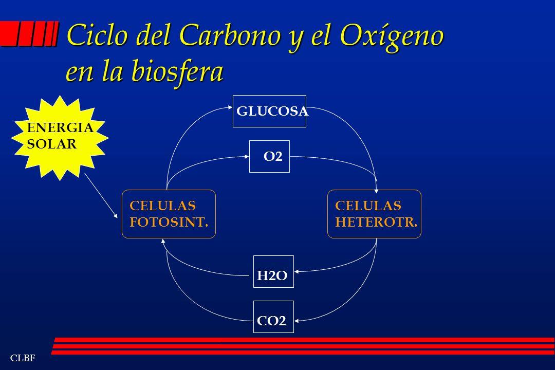 Ciclo del Carbono y el Oxígeno en la biosfera