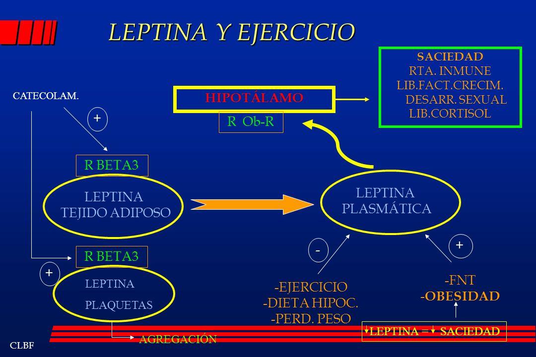 LEPTINA Y EJERCICIO HIPOTÁLAMO + R Ob-R R BETA3 LEPTINA LEPTINA