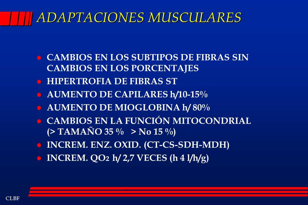 ADAPTACIONES MUSCULARES