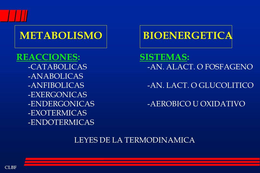 METABOLISMO BIOENERGETICA