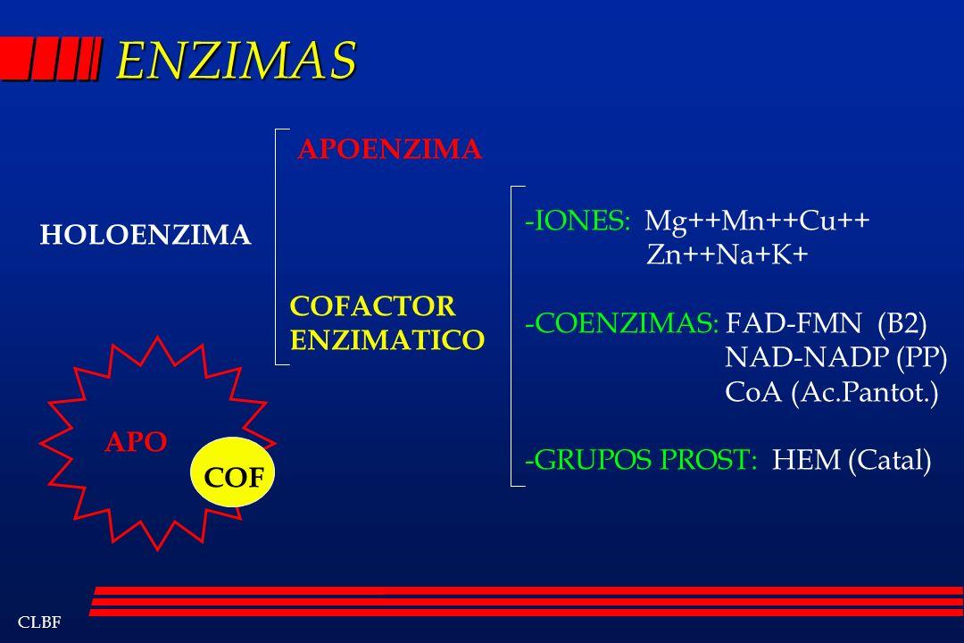 ENZIMAS APOENZIMA -IONES: Mg++Mn++Cu++ Zn++Na+K+