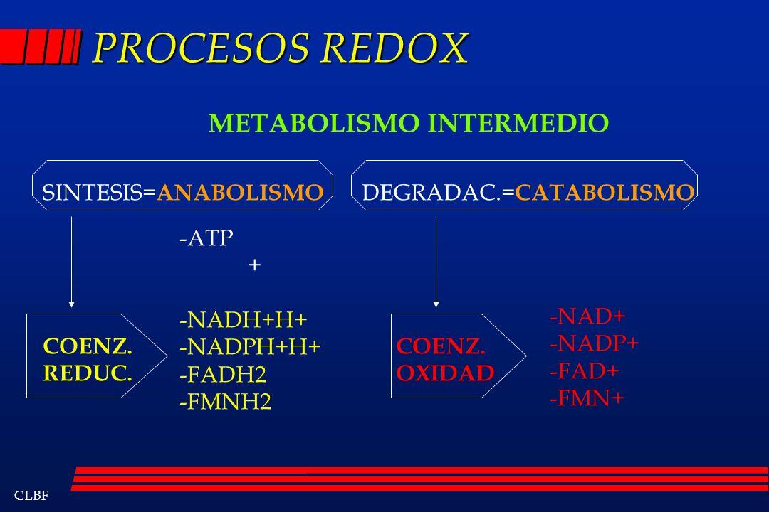 PROCESOS REDOX METABOLISMO INTERMEDIO