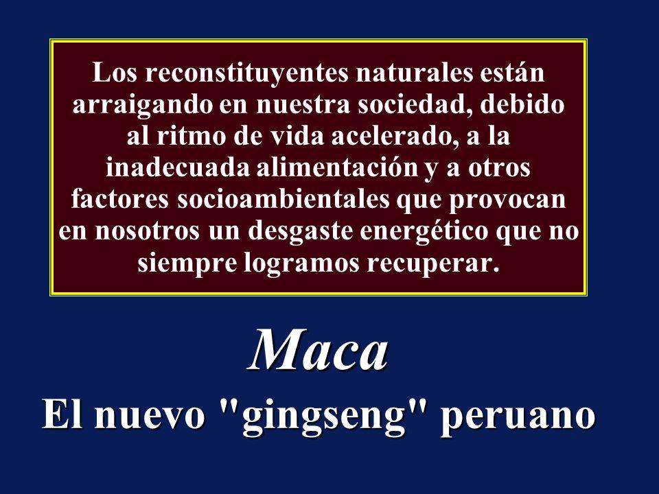Maca El nuevo gingseng peruano