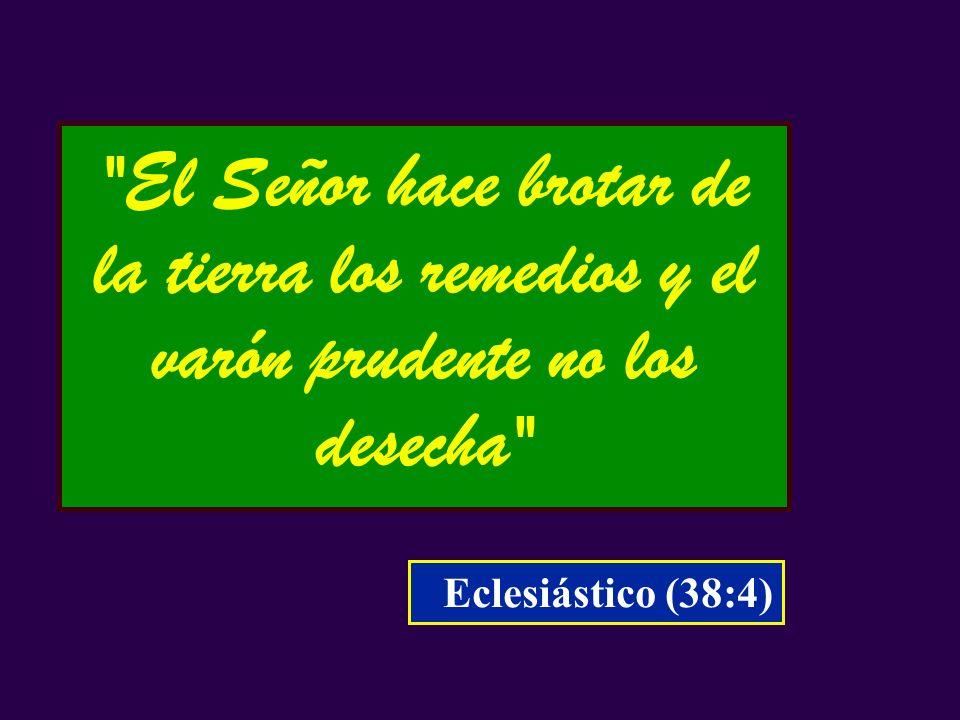 El Señor hace brotar de la tierra los remedios y el varón prudente no los desecha