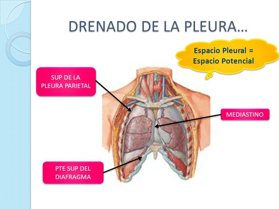 Moderno Anatomía Del Espacio Cuadrangular Componente - Imágenes de ...