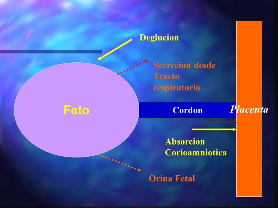 Feto Placenta Deglucion Secrecion desde Tracto respiratorio Cordon