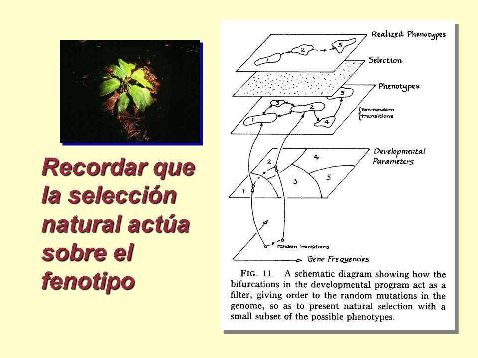 Recordar que la selección natural actúa sobre el fenotipo