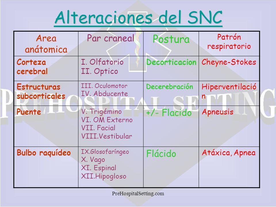 Alteraciones del SNC Postura Area anátomica Par craneal +/- Flacido