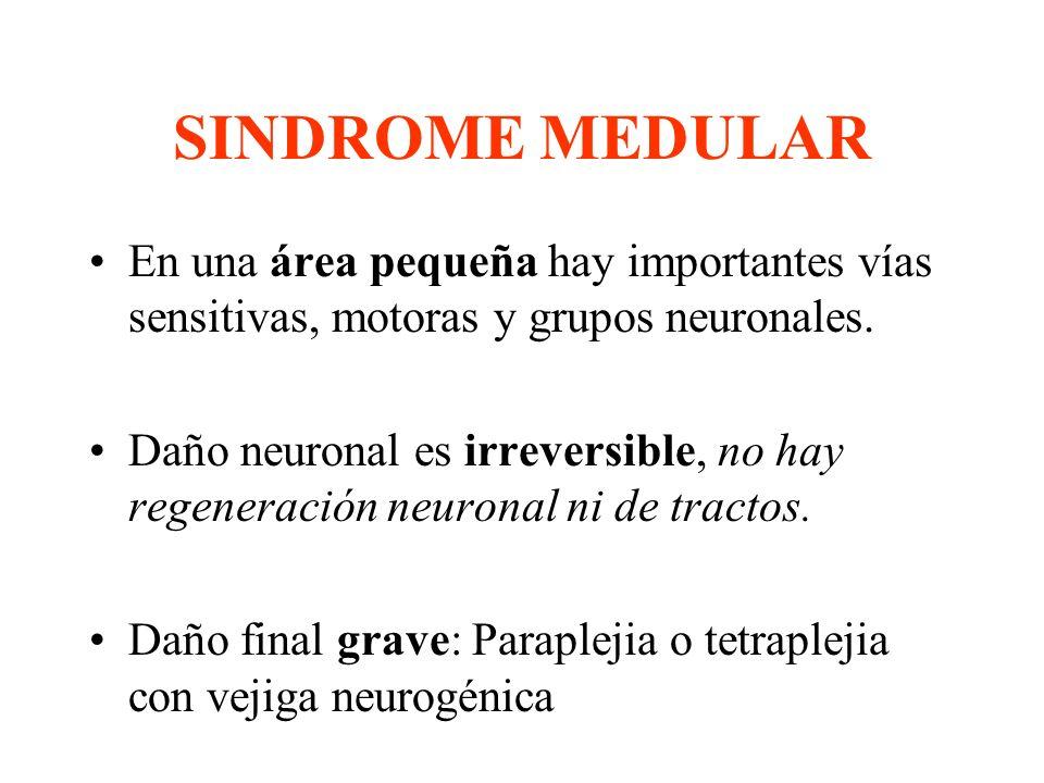 SINDROME MEDULAR En una área pequeña hay importantes vías sensitivas, motoras y grupos neuronales.
