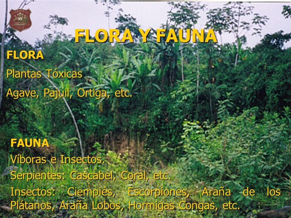 FLORA Y FAUNA FLORA Plantas Tóxicas Agave, Pajuil, Ortiga, etc. FAUNA