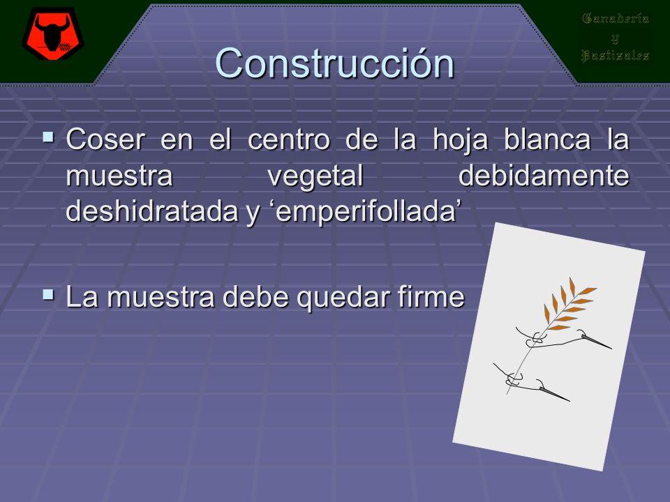 Construcción Coser en el centro de la hoja blanca la muestra vegetal debidamente deshidratada y 'emperifollada'