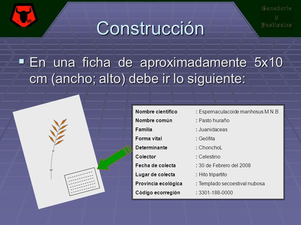 Construcción En una ficha de aproximadamente 5x10 cm (ancho; alto) debe ir lo siguiente: Nombre científico : Espernaculacoide manhosus M.N.B.