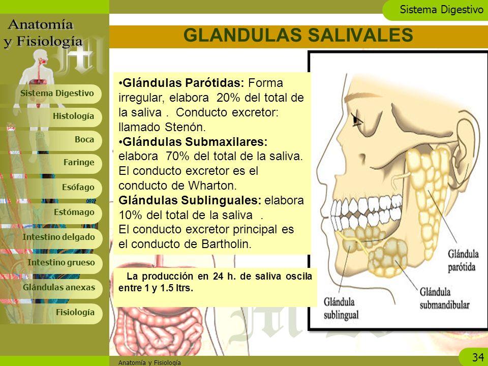 Lujoso Anatomía De La Glándula Salival Submandibular Imagen ...