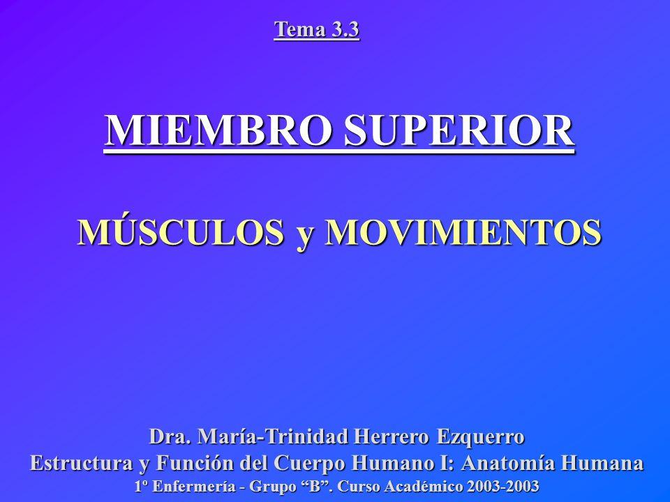 MIEMBRO SUPERIOR MÚSCULOS y MOVIMIENTOS Tema ppt video online descargar