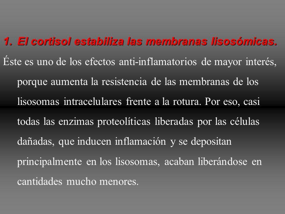 El cortisol estabiliza las membranas lisosómicas.